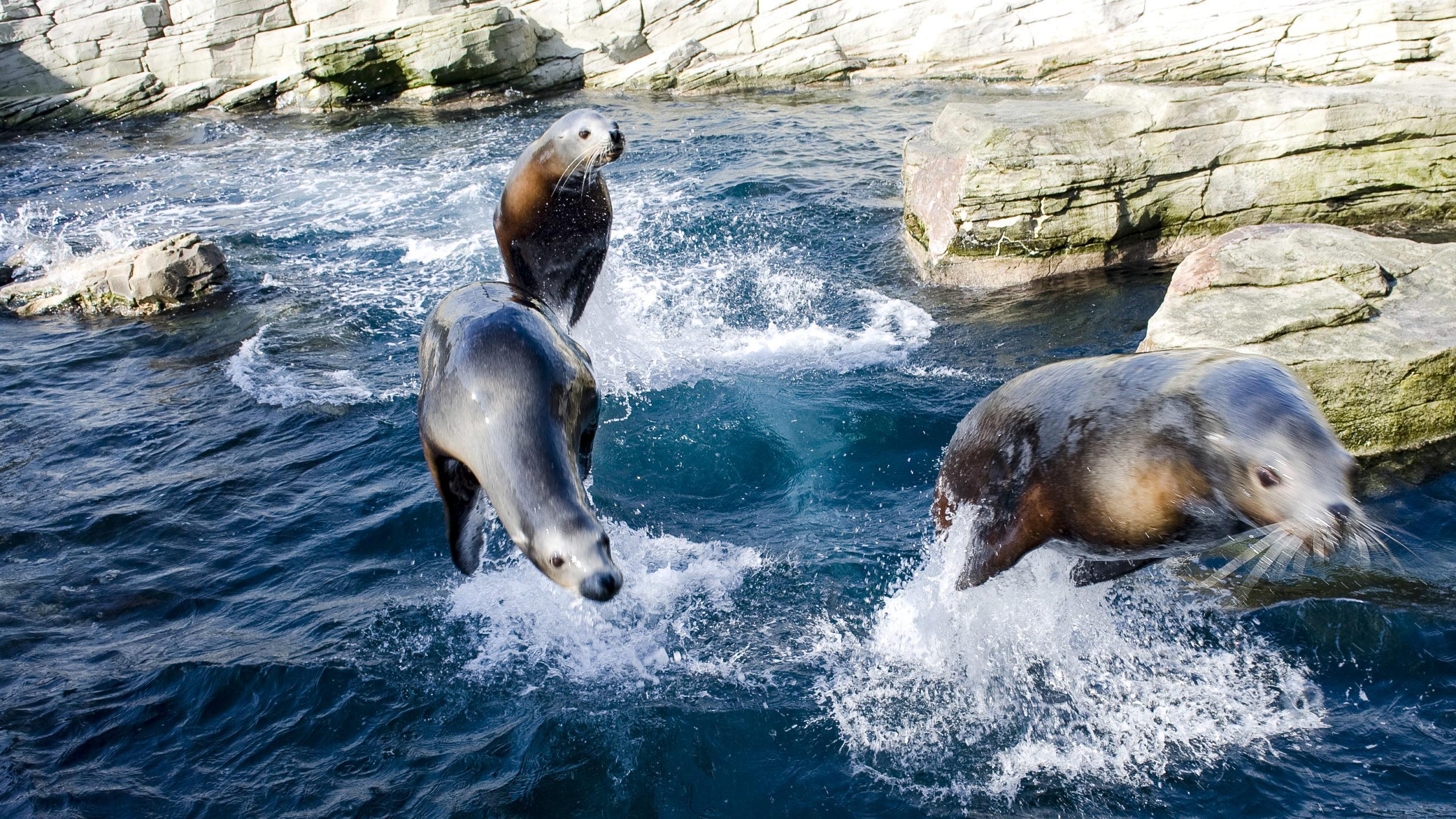 Nausicaa: Seelöwen. Foto: Hilke Maunder