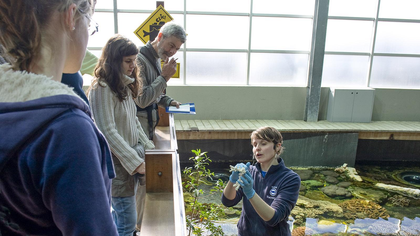 Nausicaa: Bei den Fütterungen werden die Meeresbewohner vorgestellt. Foto: Hilke Maunder