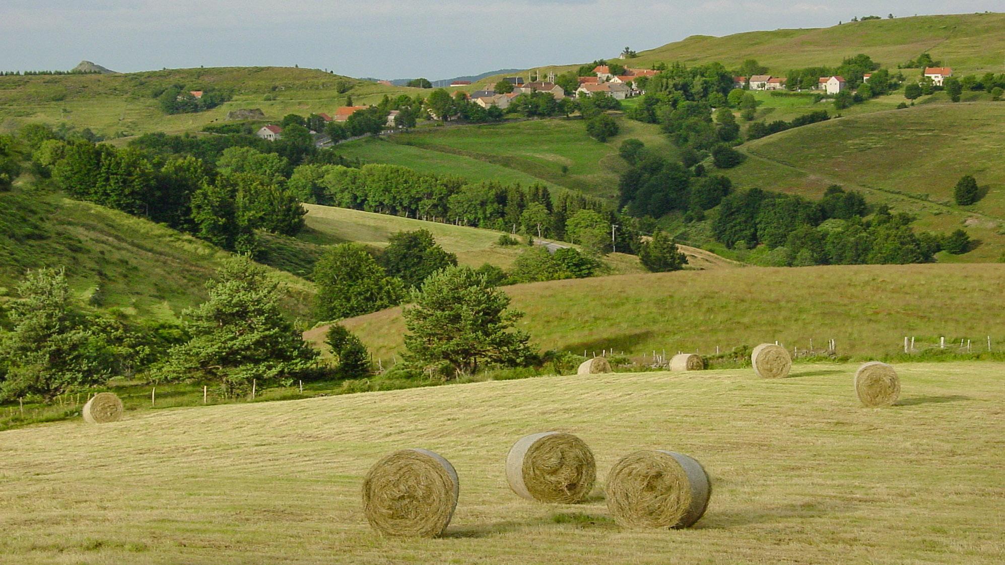 In den Monts d'Ardèche. Foto: Hilke Maunder