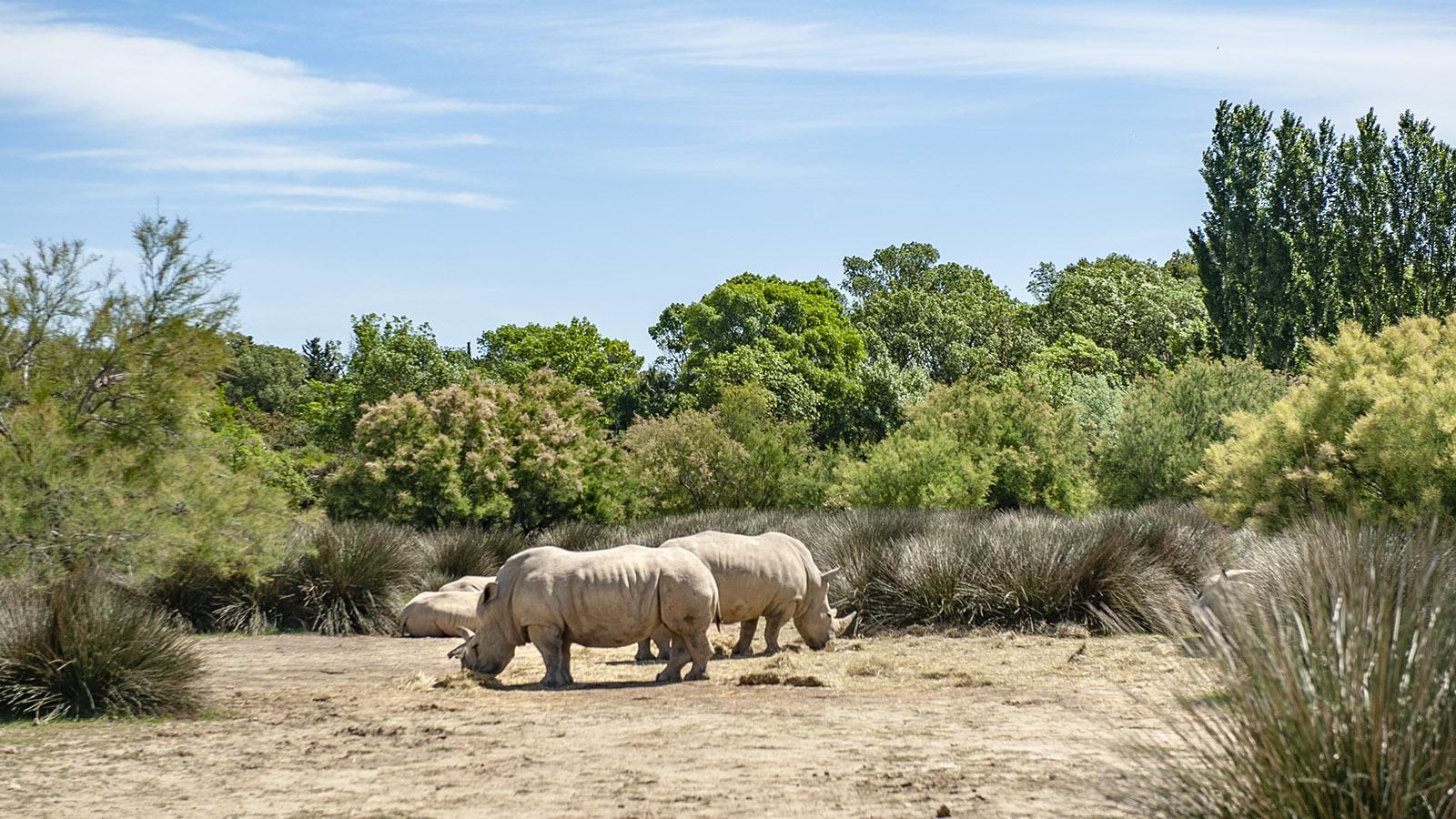 Safaripark Sigean: Rhinozeros . Foto. Hilke Maunder