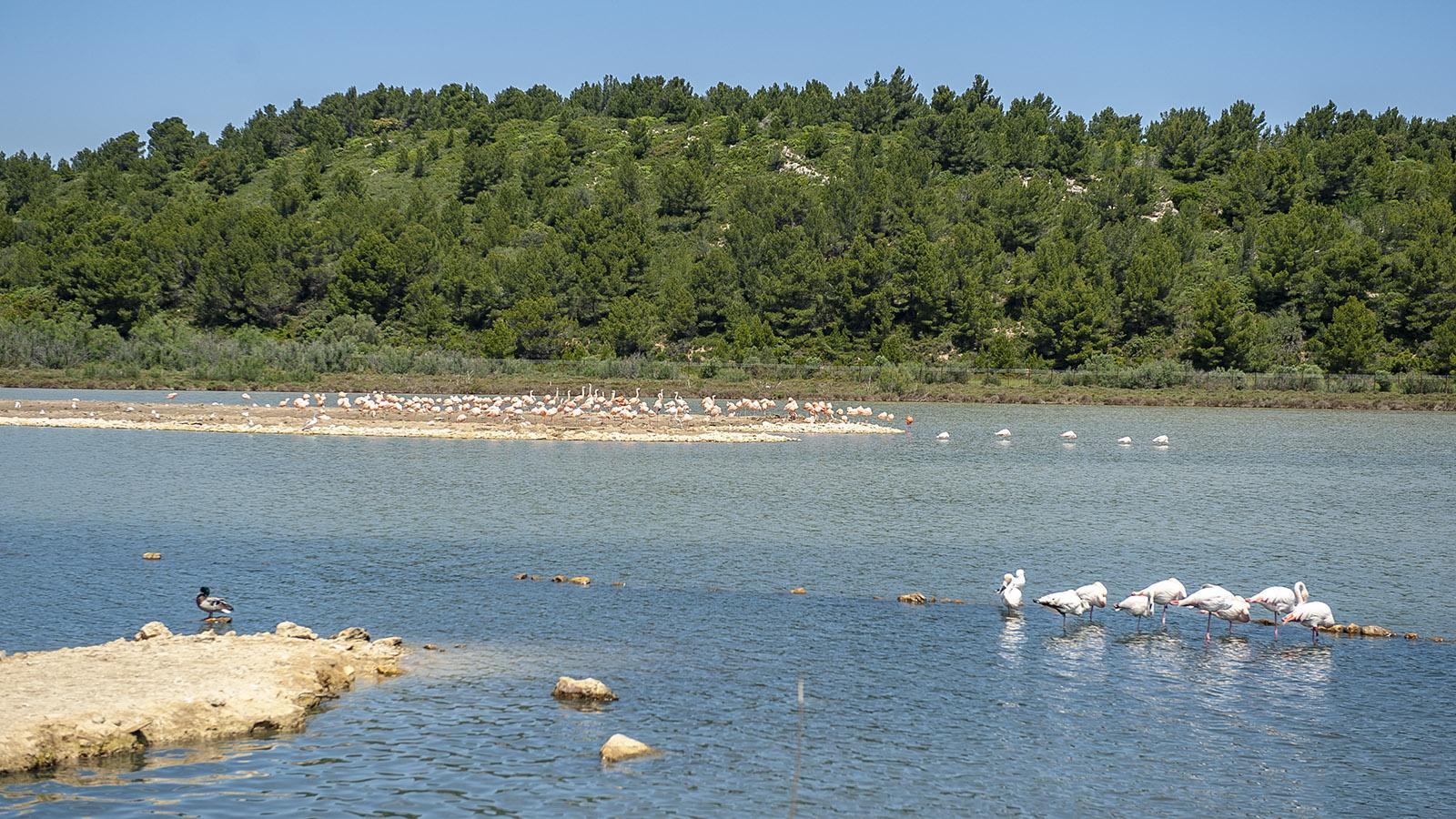 Safaripark Sigean: Flamingos. Foto. Hilke Maunder