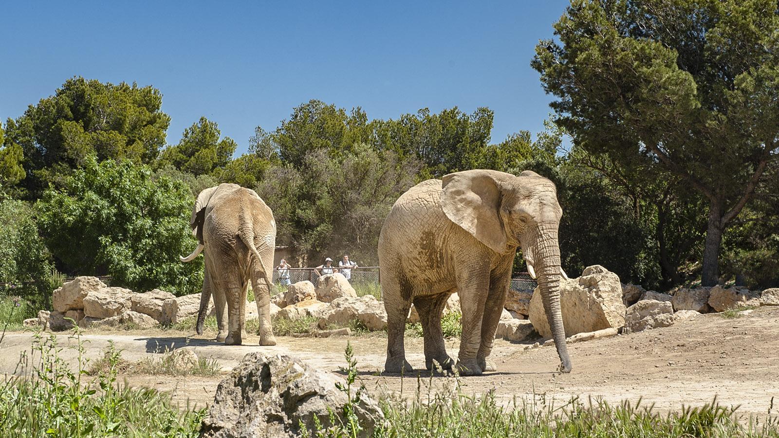 Safaripark Sigean: Elefanten . Foto. Hilke Maunder