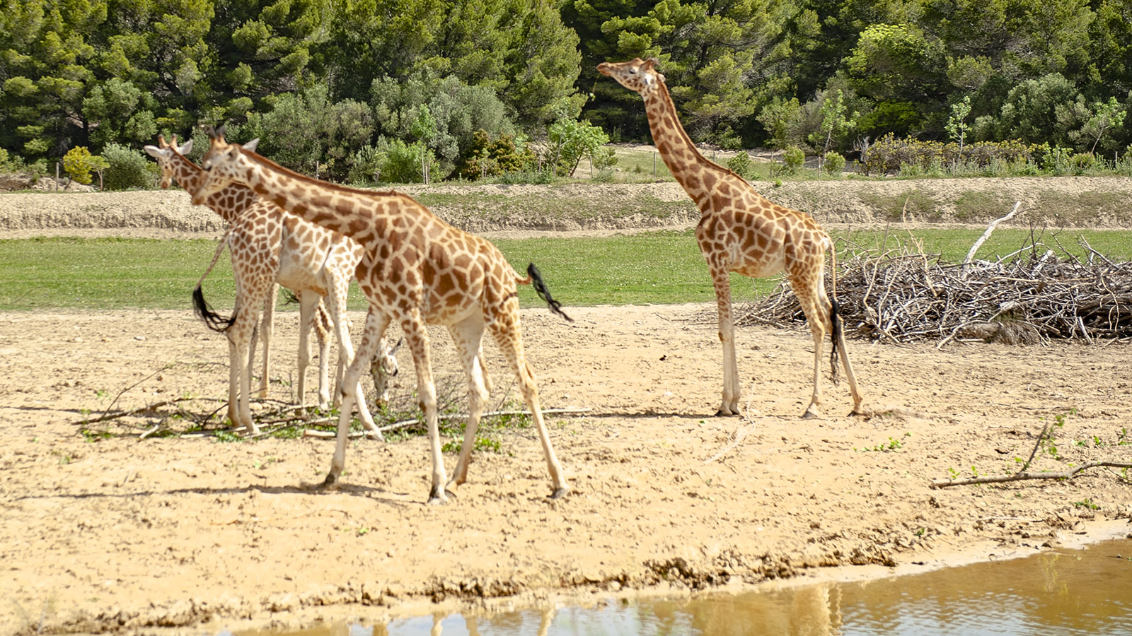 Safaripark Sigean: . Foto. Hilke Maunder