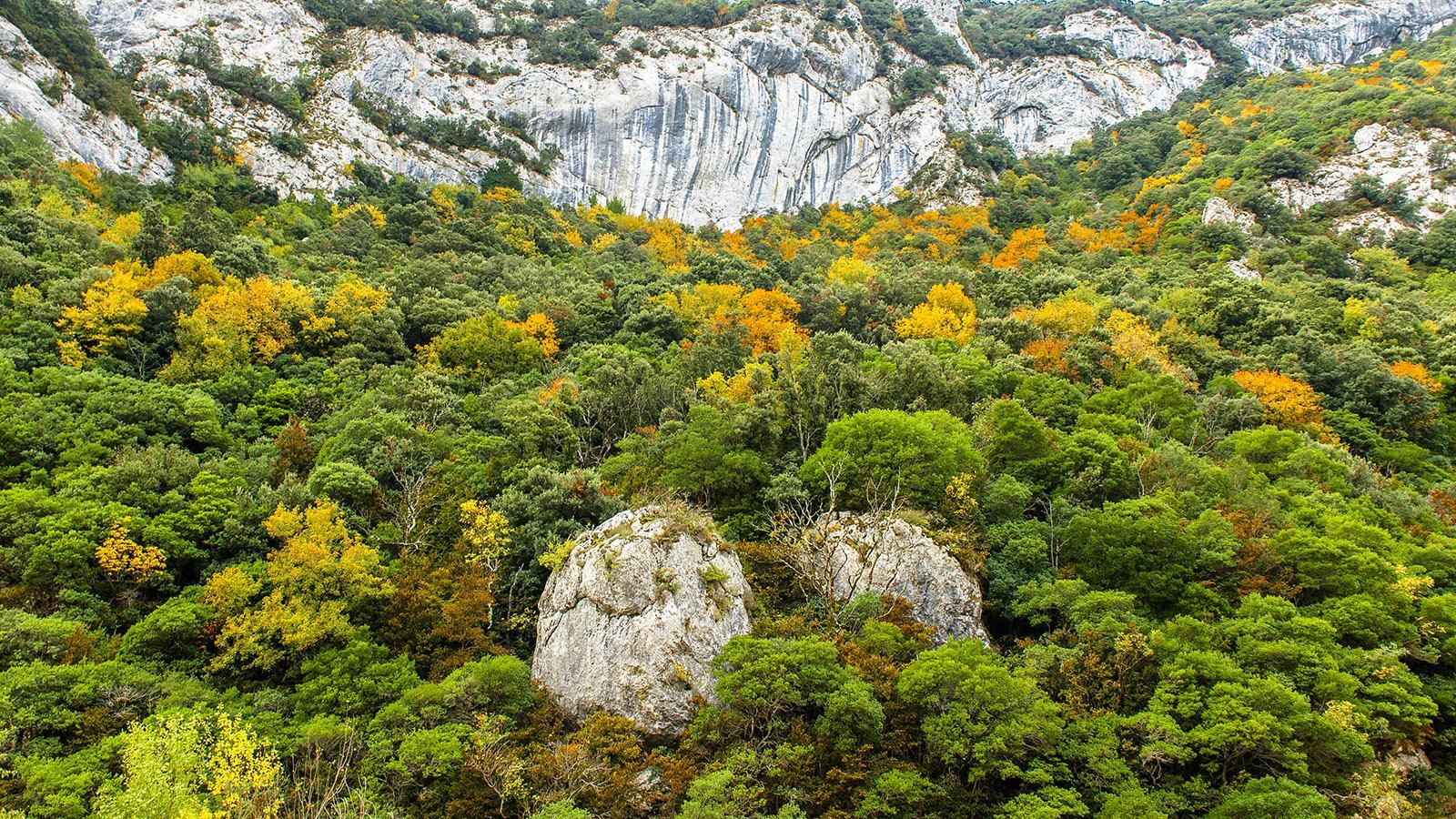 Nicht nur im Sommer, auch im Herbst zur Laubfärbung sind die Gorges de Galamus wunderschön! Foto: Hilke Maunder