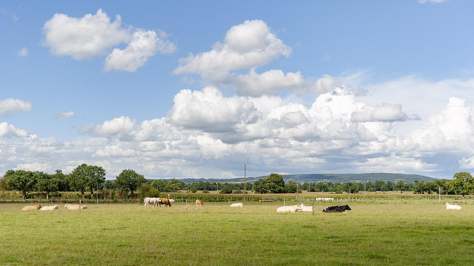 Koppeln und Weiden umgeben Mézangers. Foto: Hilke Maunder