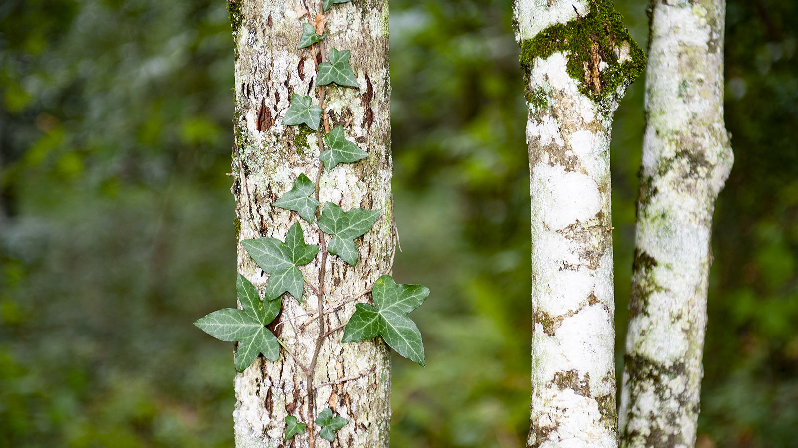 Im Wald beim Gué-de-Selle bei Mezangers. Foto: Hilke Maunder