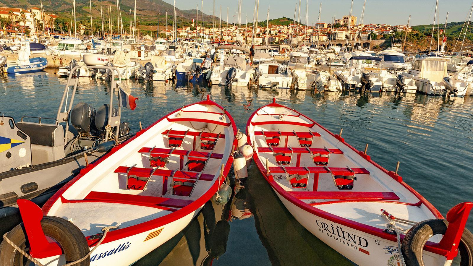 Banyuls: Hafen. Foto: Hilke Maunder