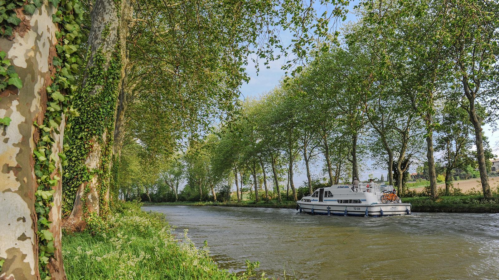 Canal du Midi: Platanen säumen den Wasserweg. Foto: Hilke Maunder