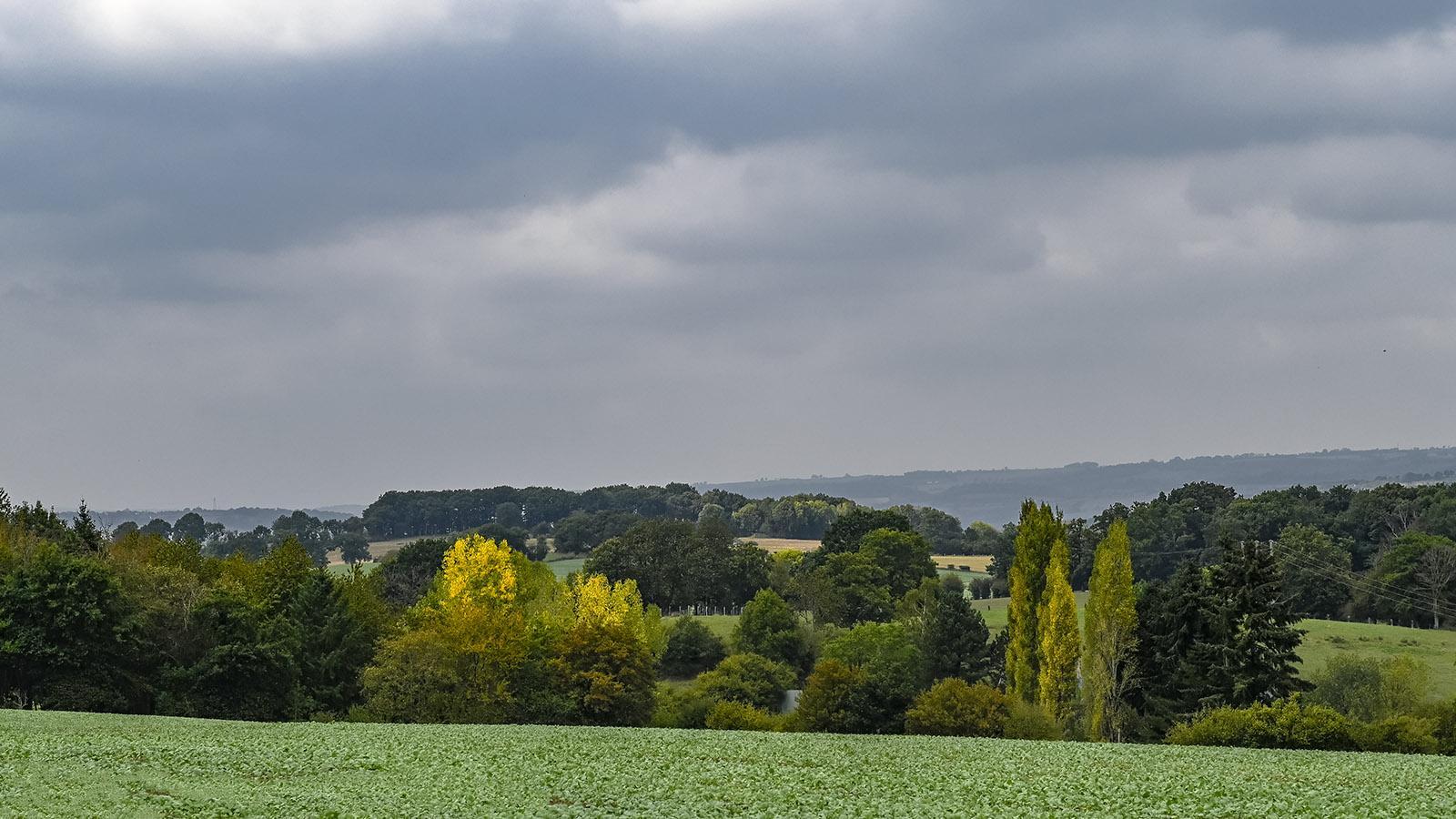 Herbst in der Normannischen Schweiz. Foto: Hilke Maunder