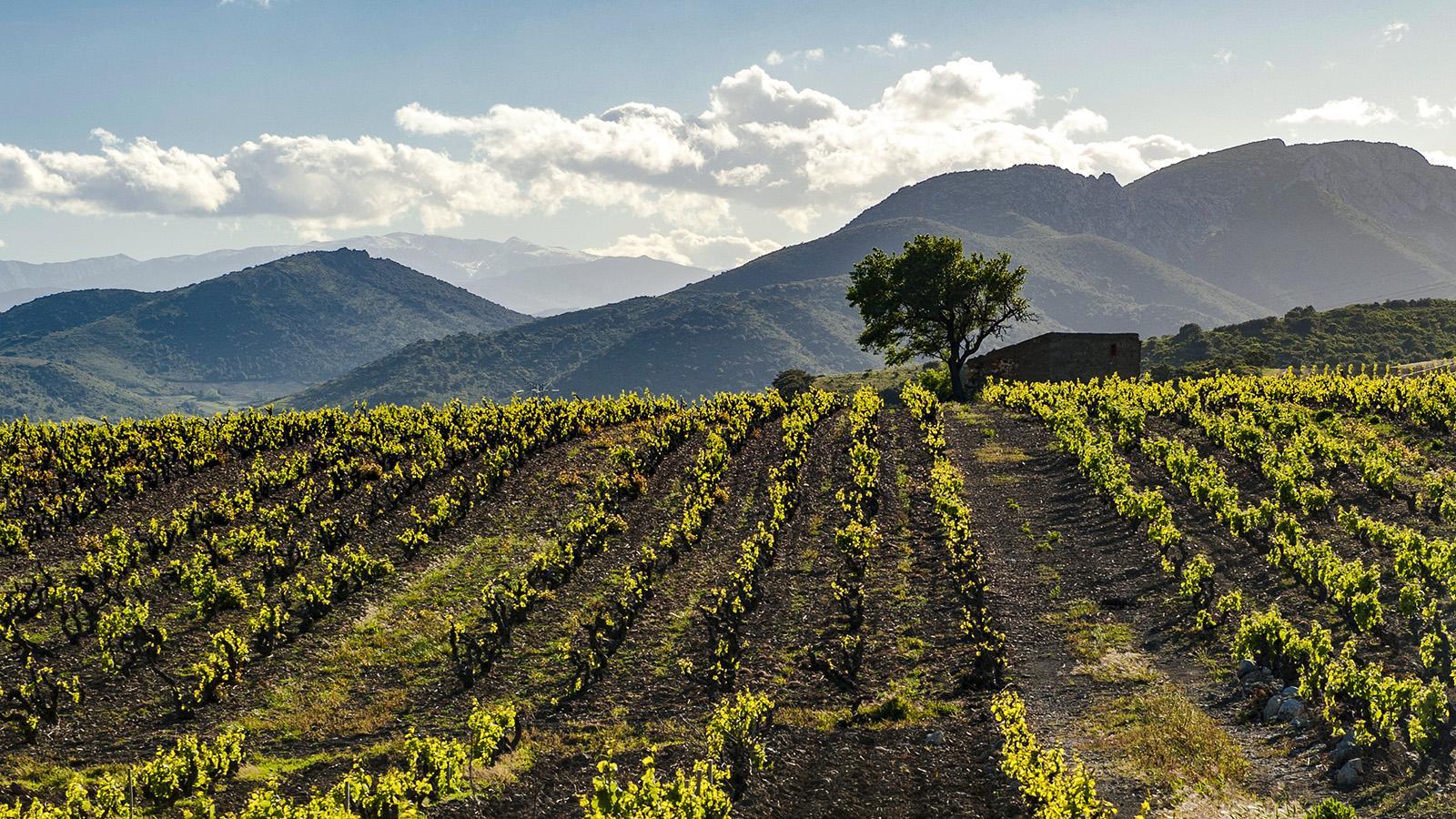 Das Vallée de l'Agly. Foto: Hilke Maunder