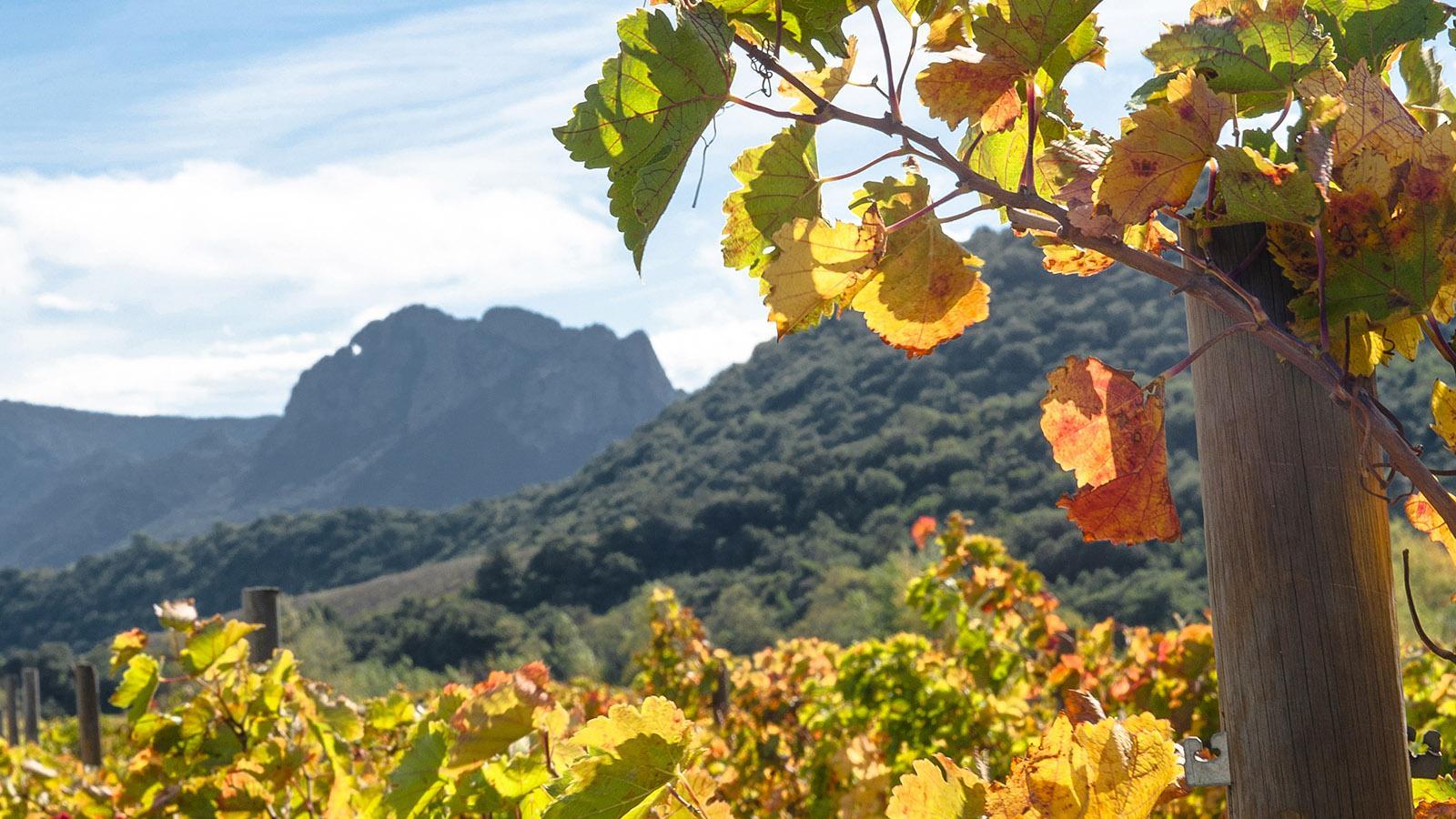 Herbst im Vallée de l'Agly. Foto: Hilke Maunder