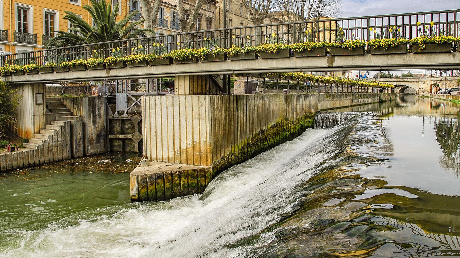 Narbonne: BLulmenschmuck am Canal de la Robine. Foto: Hilke Maunder