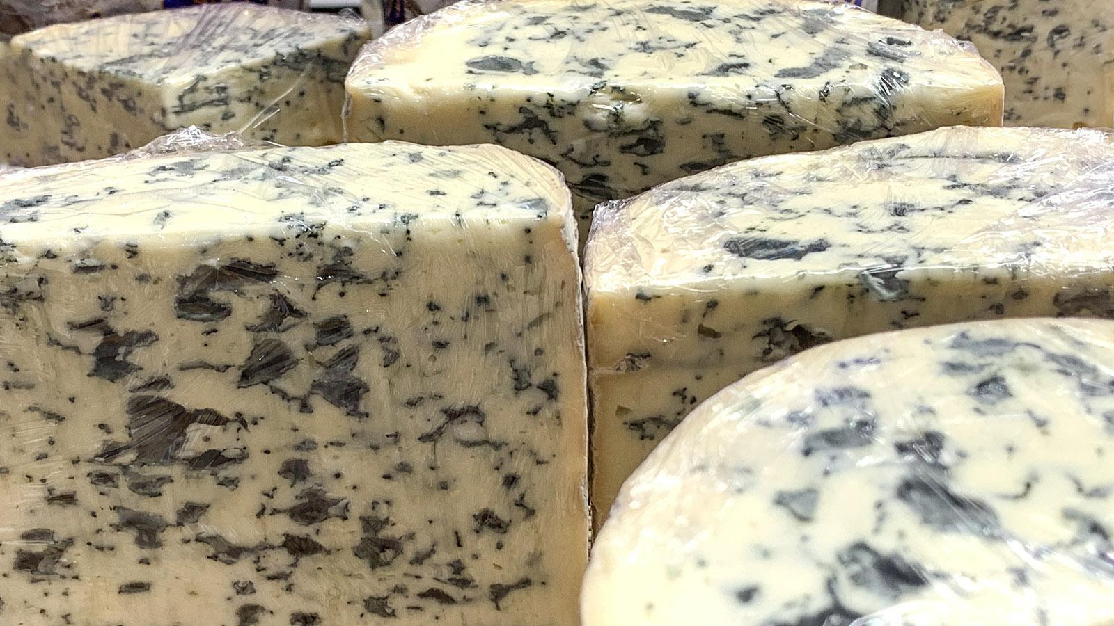 Käse der Auvergne: Fourme d'Ambert. Foto: Hilke Maunder