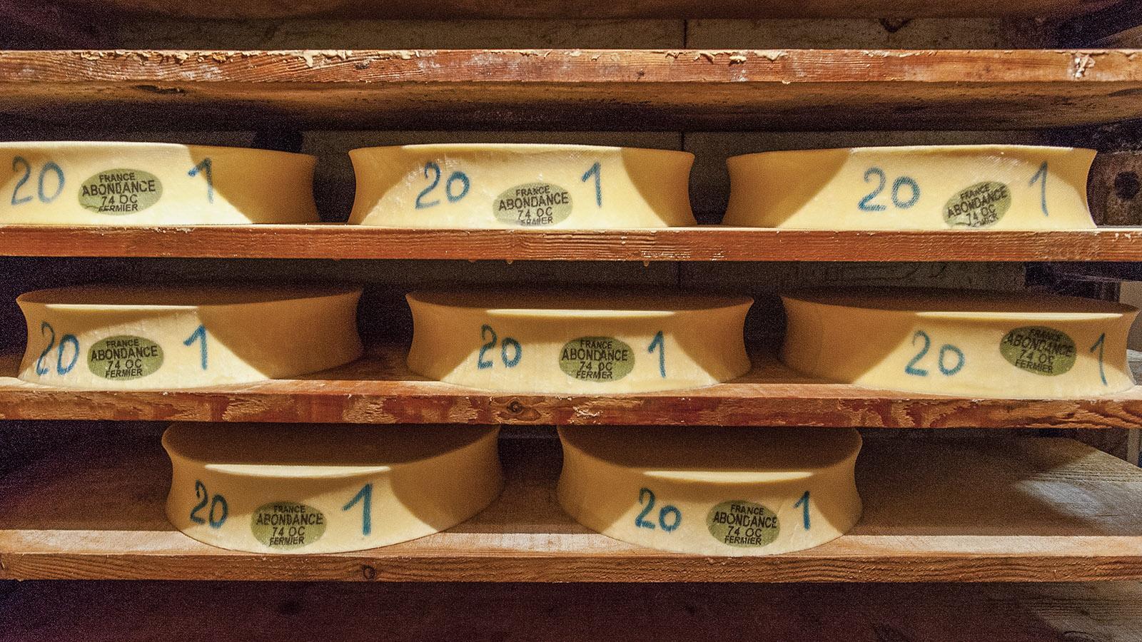 Châtel: Abondance im Reifekeller. Foto: Hilke Maunder