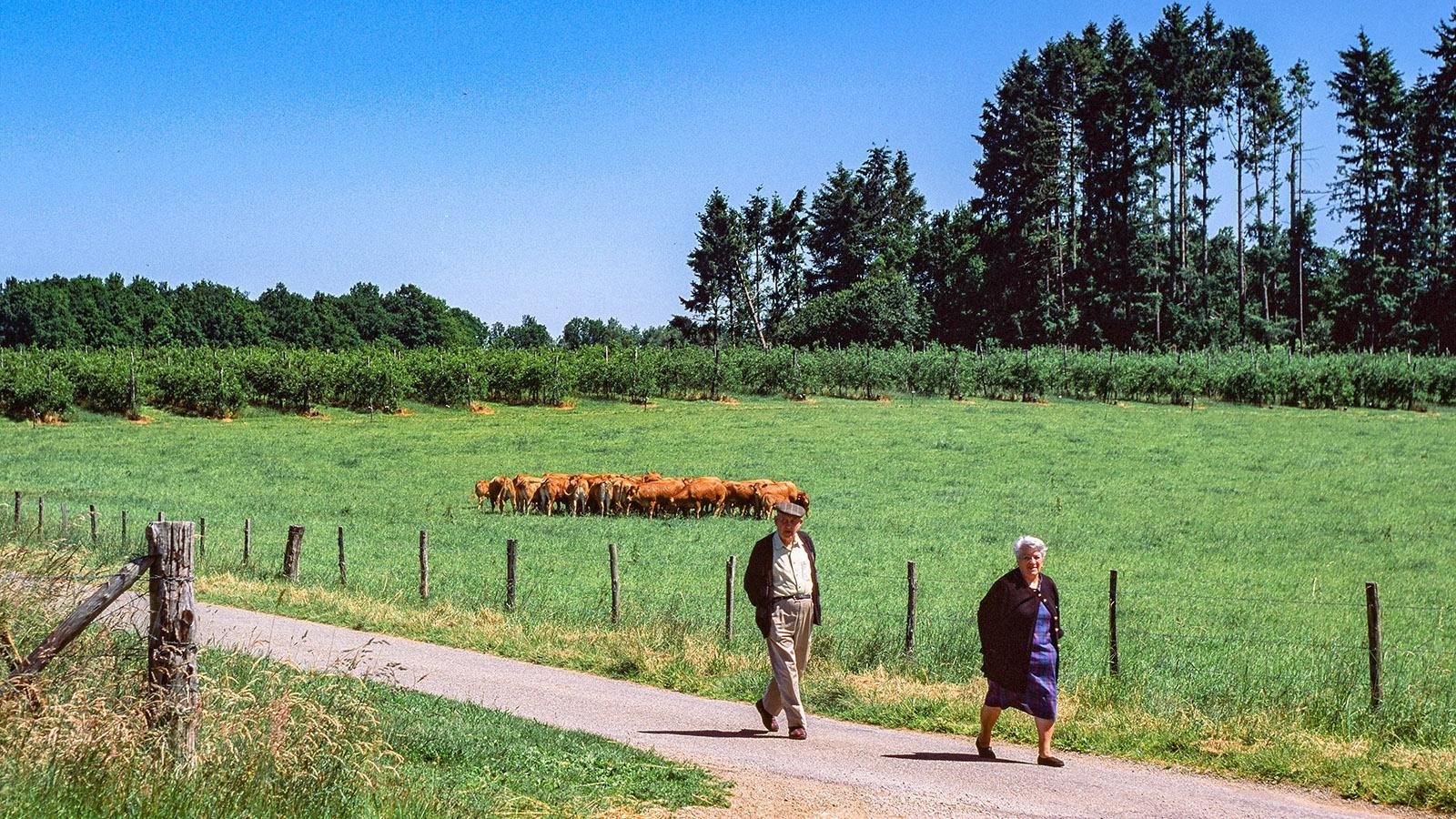 Limousin: Spaziergänger auf dem Lande. Foto: Hilke Maunder