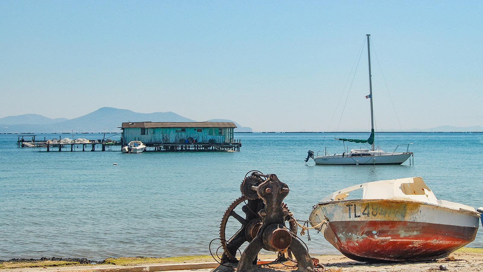 Presqu'Île du Cap Sicié : Tamaris. Foto: Hilke Maunder