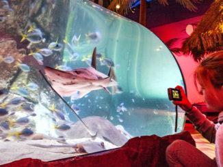 Aquarium: was für eine faszinierende Unterwasserwelt eröffnet sich dort!