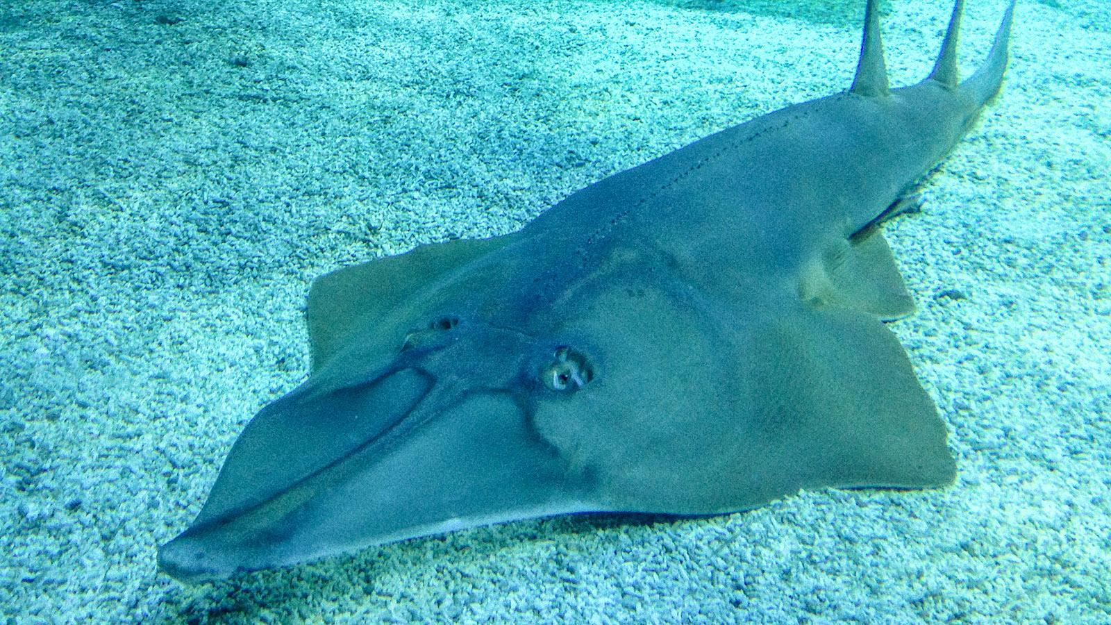 Aquarium. Foto: Hilke Maunder