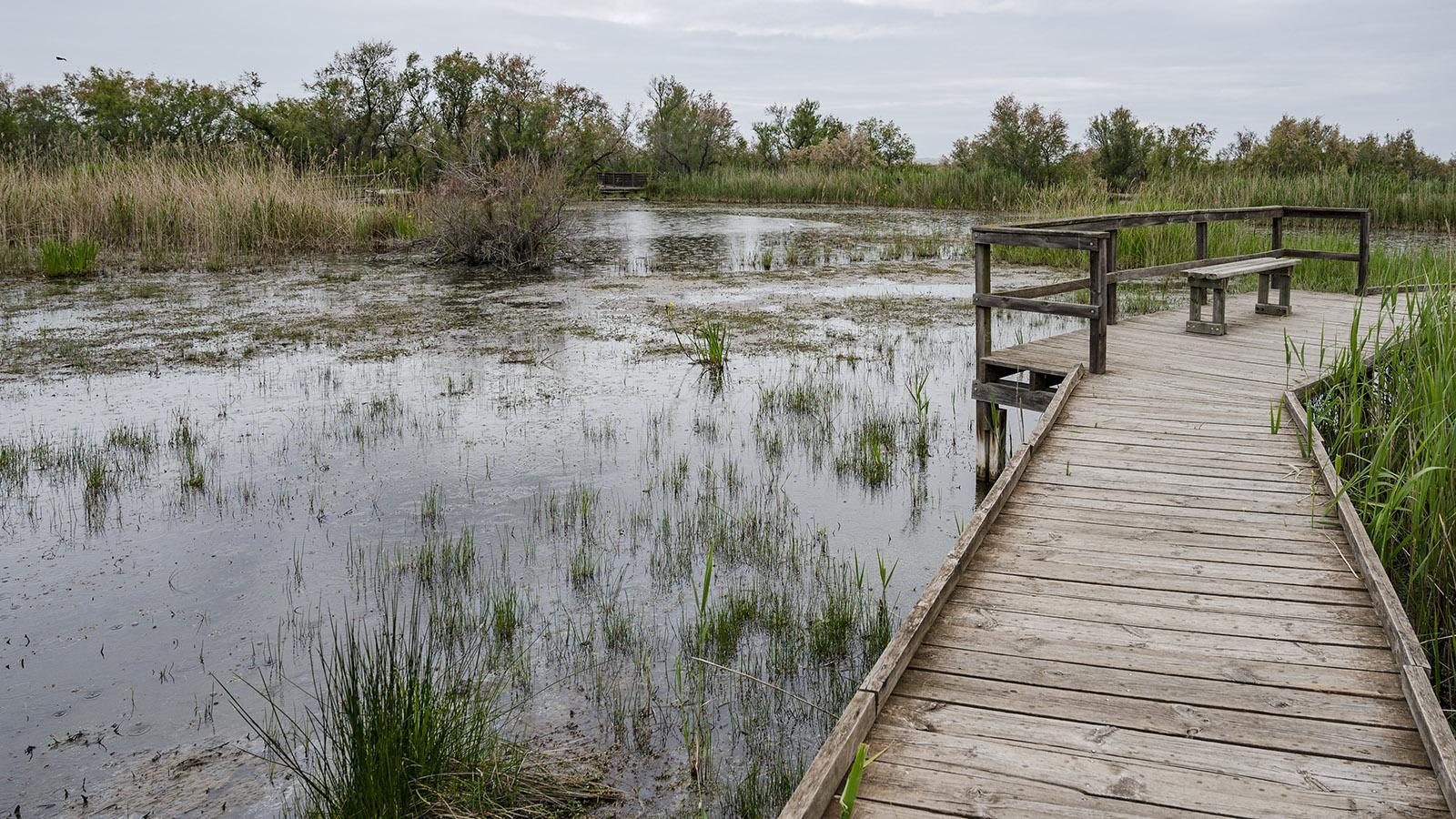 Bohlenwege führen durch die amphibische Landschaft und hin zu Aussichtspunkten. Foto: Hilke Maunder