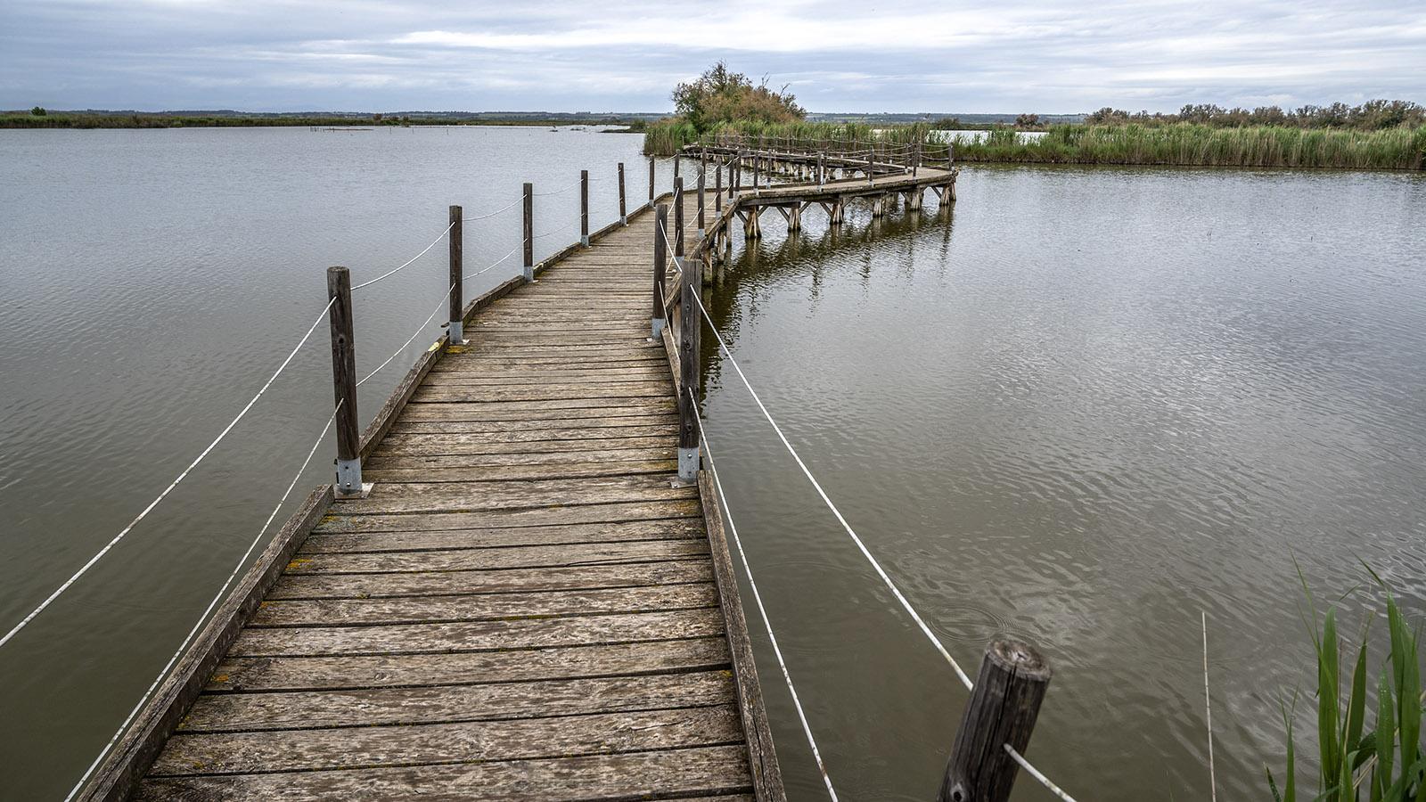 Je weiter ihr den Bohlenwege folgt, desto amphibischer wird die Landschaft am Centre de Scamandre. Foto: Hilke Maunder