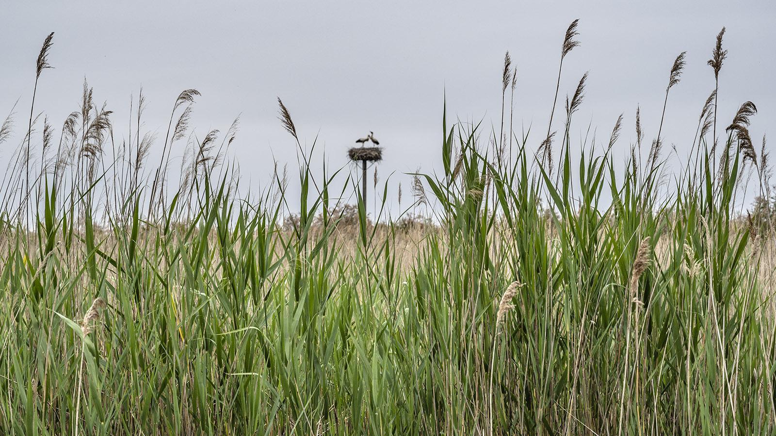 Störche nisten im Naturreservat von Scamandre. Foto: Hilke Maunder