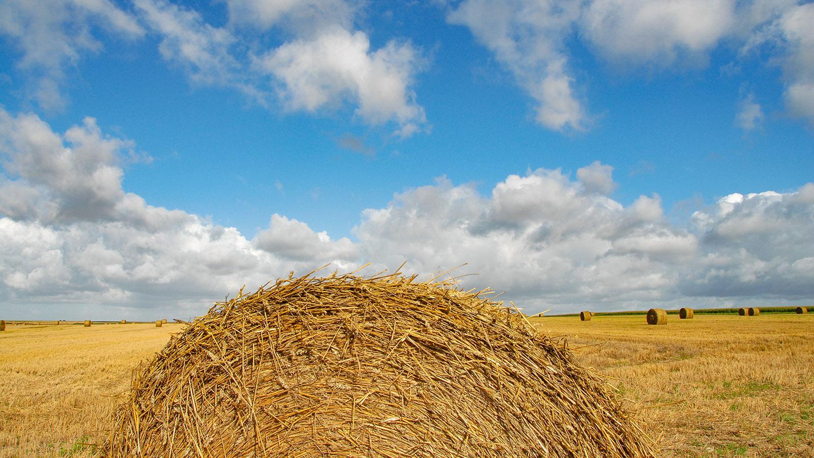 Zwischen Doullens und Amien: abgeerntete Kornfelder. Foto: Hilke Maunder