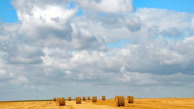 Zwischen Doullens und Amiens: abgeerntete Kornfelder. Foto: Hilke Maunderwischen Doullens und Amien: abgeerntete Kornfelder