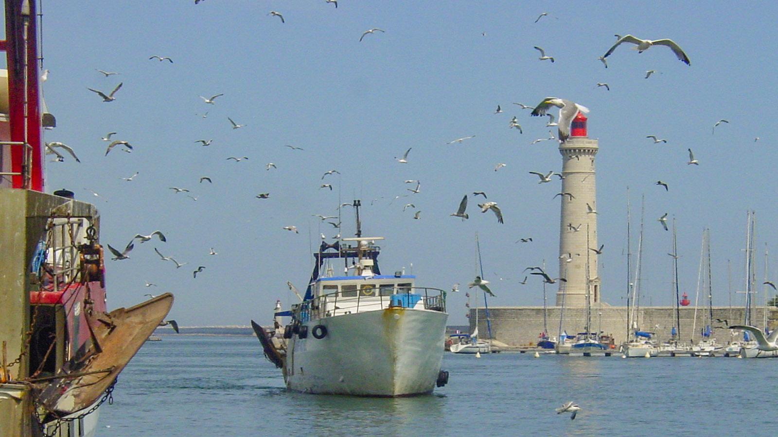 Ein Fischerboot kehrt heim nach Sète. Foto: Hilke Maunder