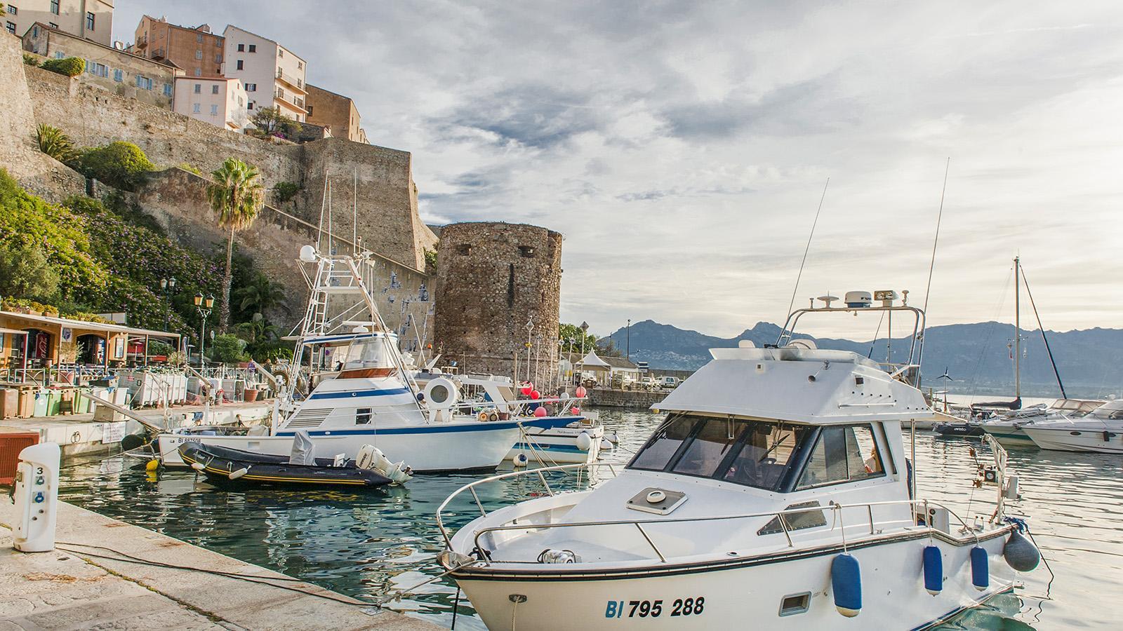 Zitadelle und Hafen von Calvi. Foto: Hilke Maunder