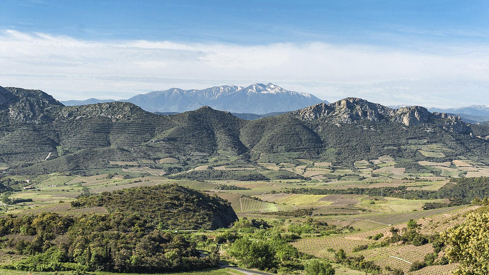 Das Tal des Agly bei Maury. Im Hintergrund: der Canigou. Foto: Hilke Maunder