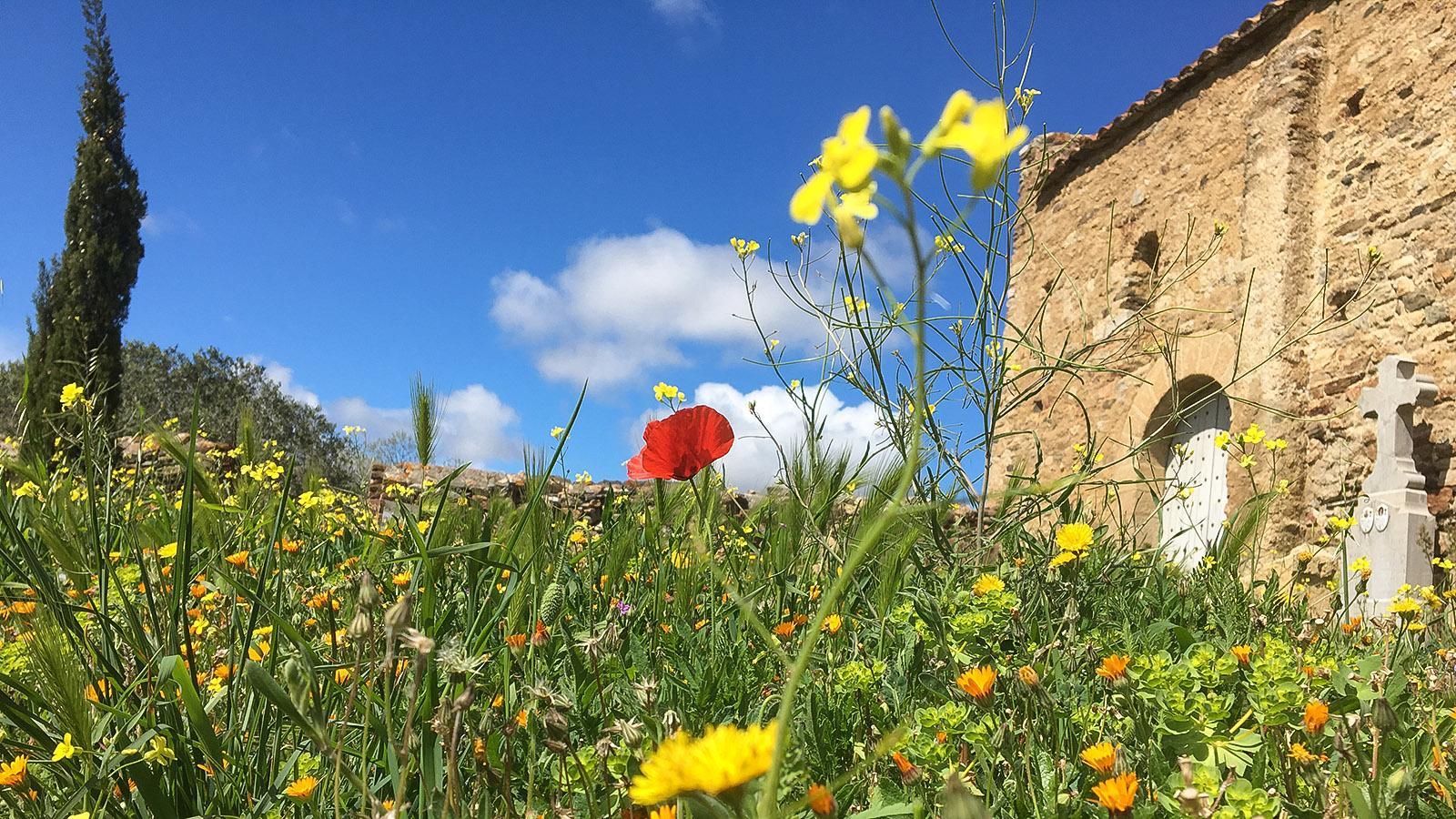 Frühling an der Kapelle von Planèzes. Foto: Hilke Maunder
