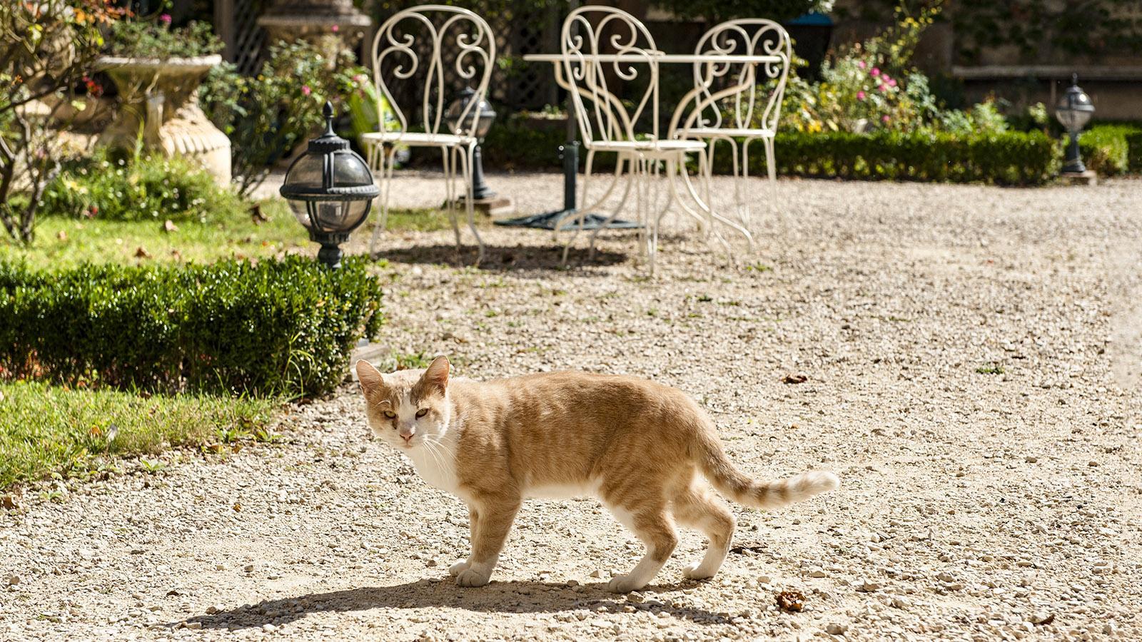 Palais des Évêques: Die Hauskatze tigert im Innenhof-Garten umher. Foto: Hilke Maunder