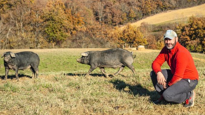 Domaine Rey: Nicolas Rey mit seinen Schweinen. Foto: Hilke Maunder