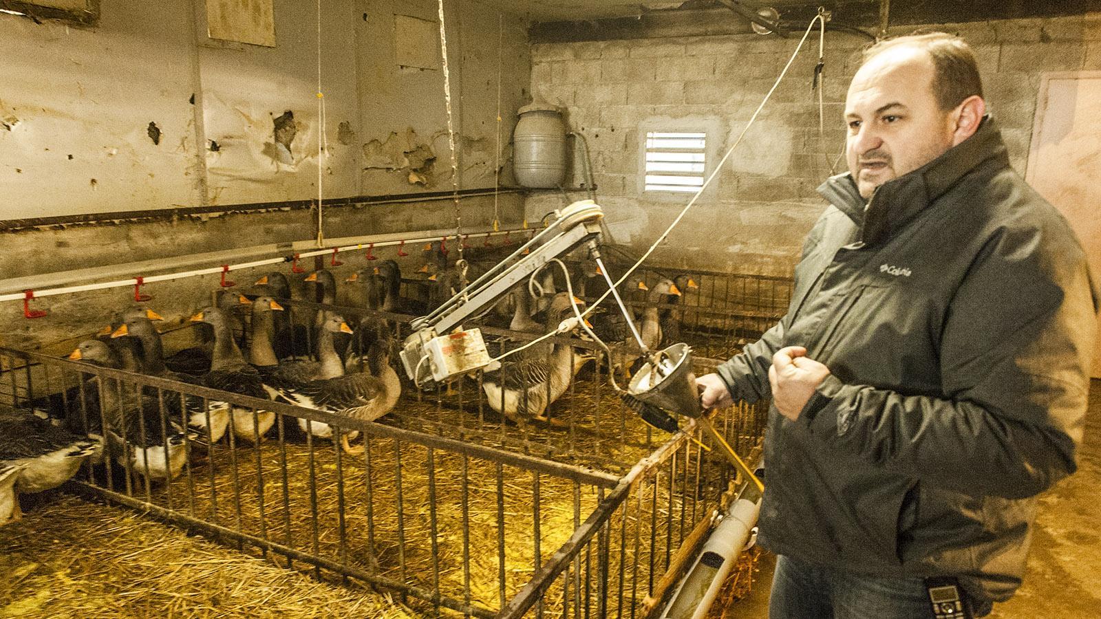 Foie Gras: Im Mast-Stall bei Ramajo. Foto: Hilke Maunder