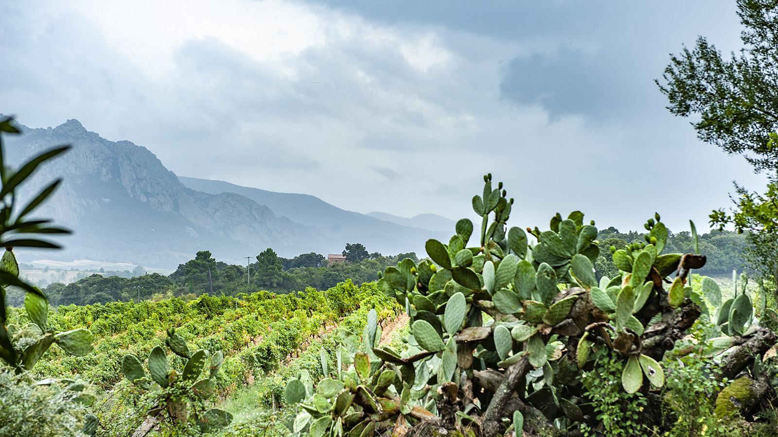 Die Weingärten des Weinguts Saparale. Foto: Hilke Maunder