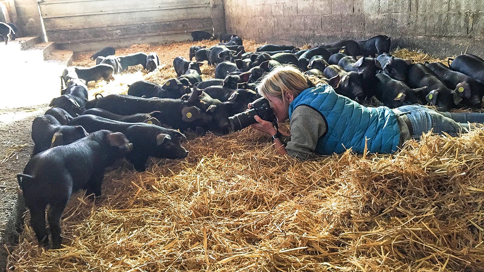 Porc noir de Bigorre: Hilke Maunder fotografiert die Ferkel.