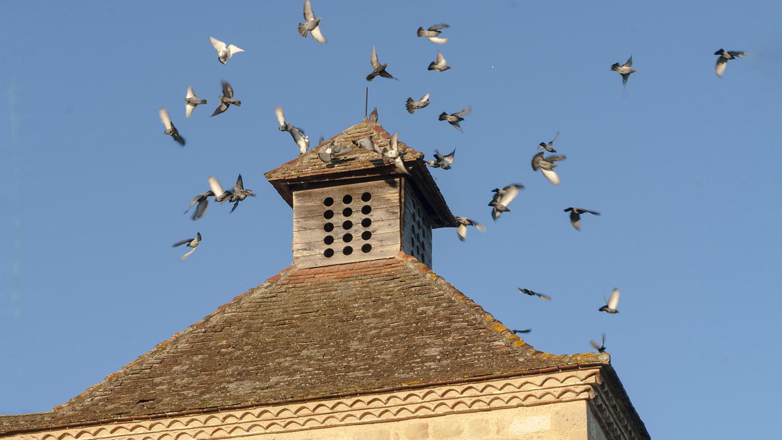 Der Taubenturm von Kloster Flaran. Foto: Hilke Maunder
