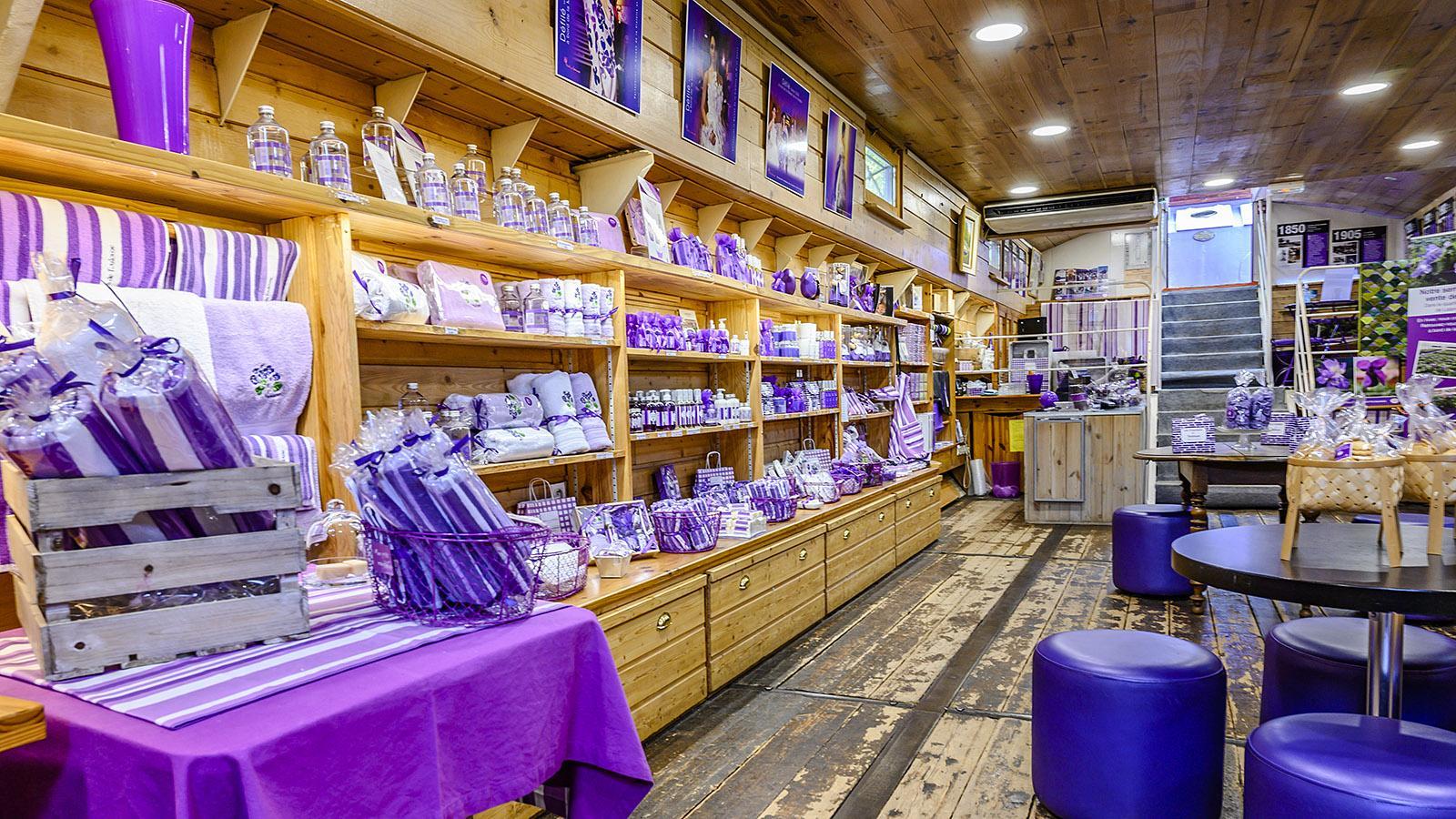 Die große Vielfalt des Veilchens: la maison de la violette. Foto: Hilke Maunder