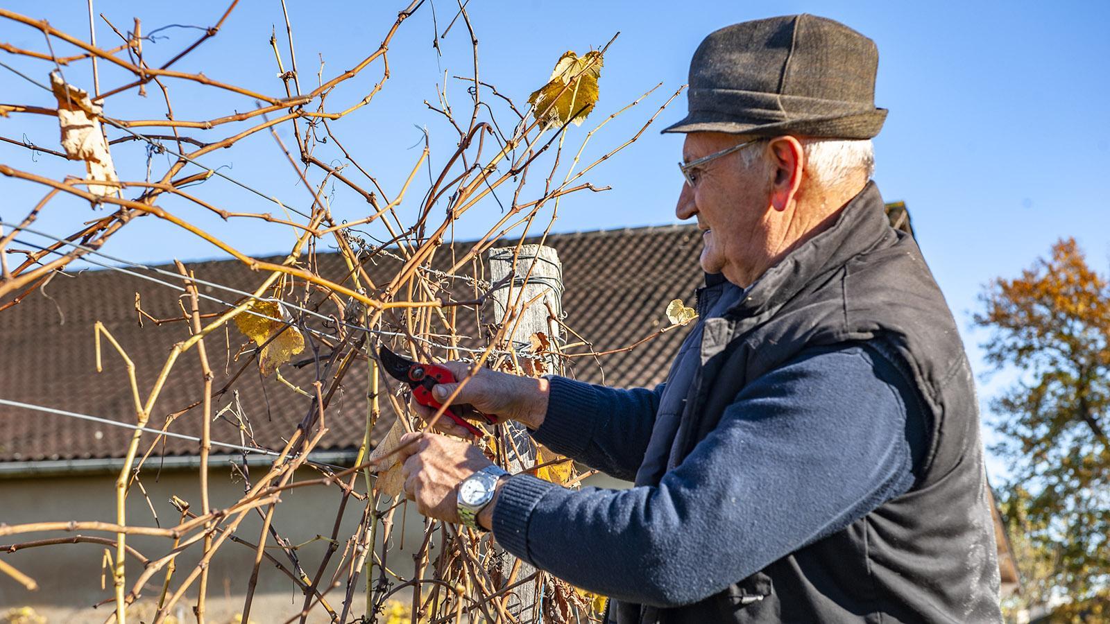 Château de Millet: Auch im Winter gibt es im Weinberg immer viel zu tun. Foto: Hilke Maunder
