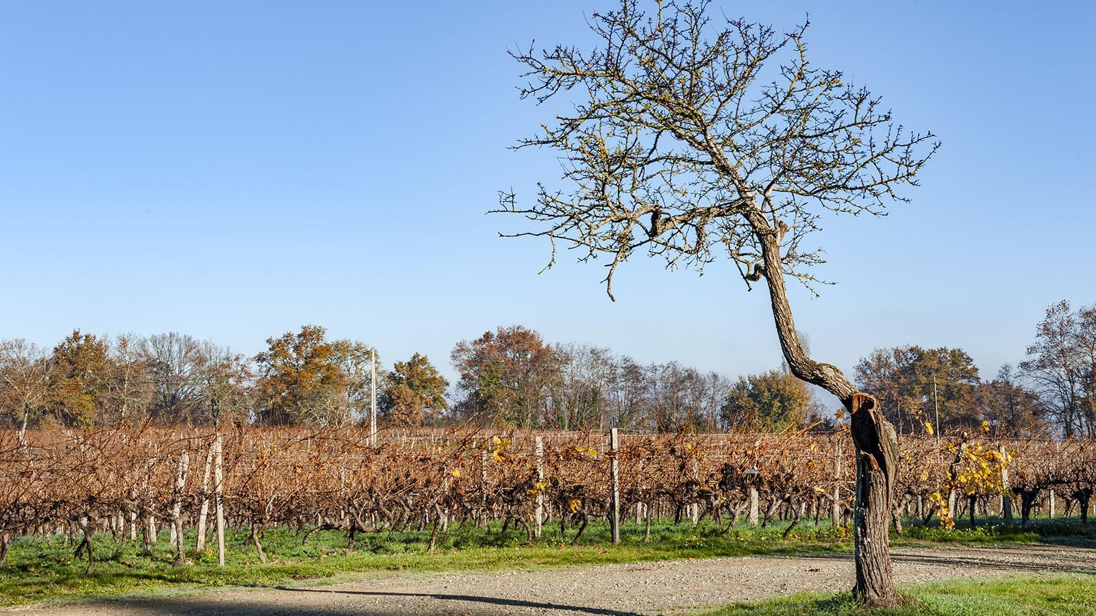 Die Weingärten des Château Millet beginnen gleich am Armagnac-Keller. Foto: Hilke Maunder