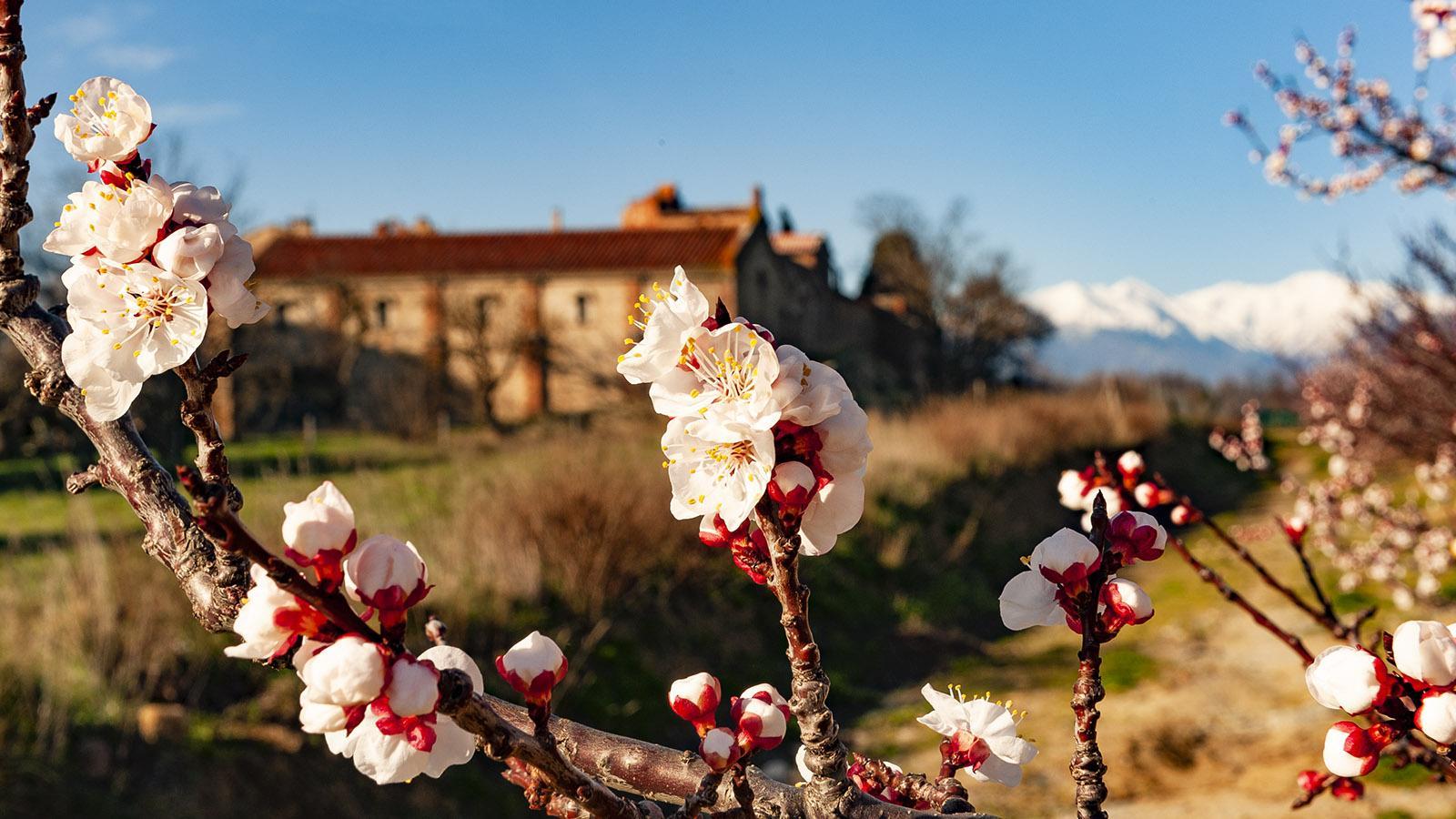 Frühling: Monastir del Campo