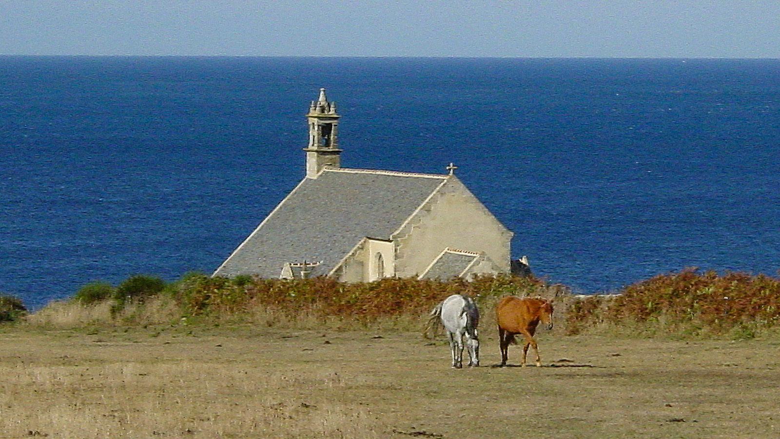 Cornouaille: An der Pointe du Van grasen Pferde. Foto: Hilke Maunder