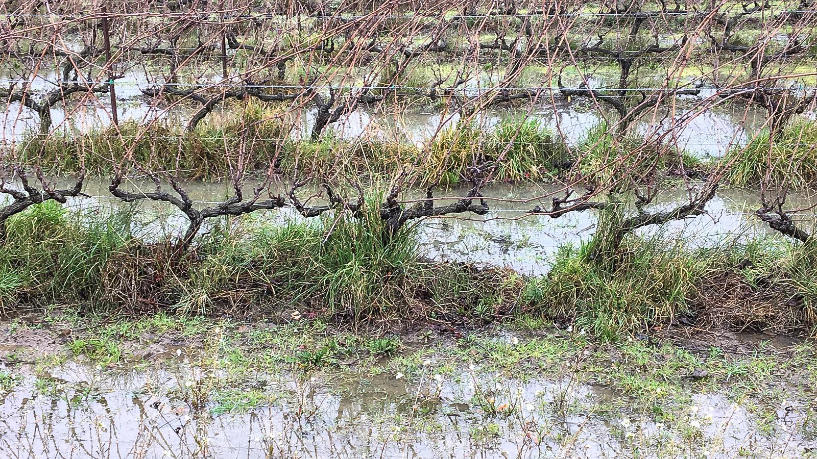 Frühling: Auch die Weinberge standen unter Wasser. Foto: Hilke Maunder