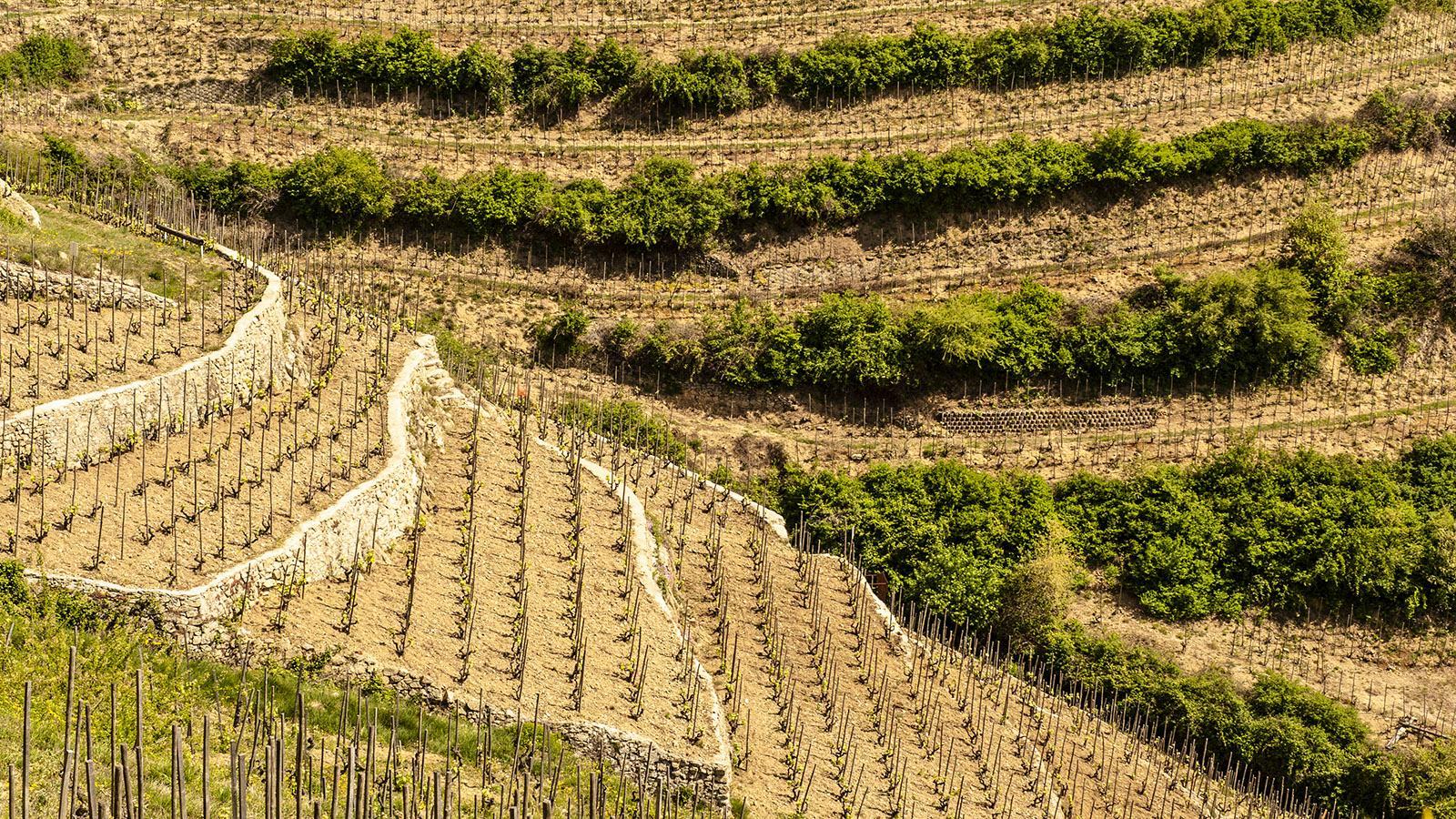 Terrassenbau in den Côtes du Rhône. Foto: Hilke Maunder