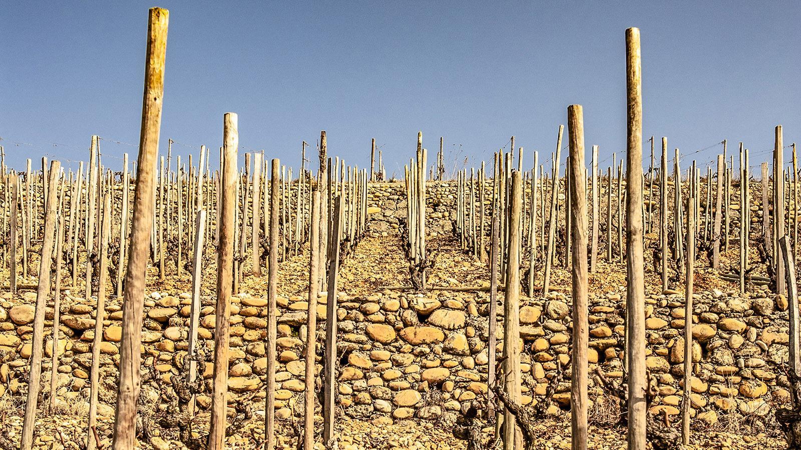 Trockenmauern und Terrassen: Weinbau in den nördlichen Côtes du Rhône. Foto: Hilke Maunder