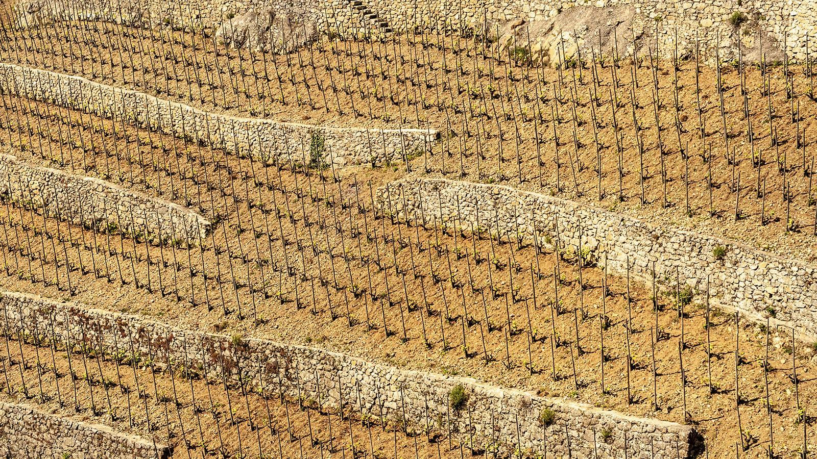 Verleihen der Landschaft grafische Struktur: die Terrassen und Trockenmauern der nördlichen Côte du Rhône. Foto: Hilke Maunder