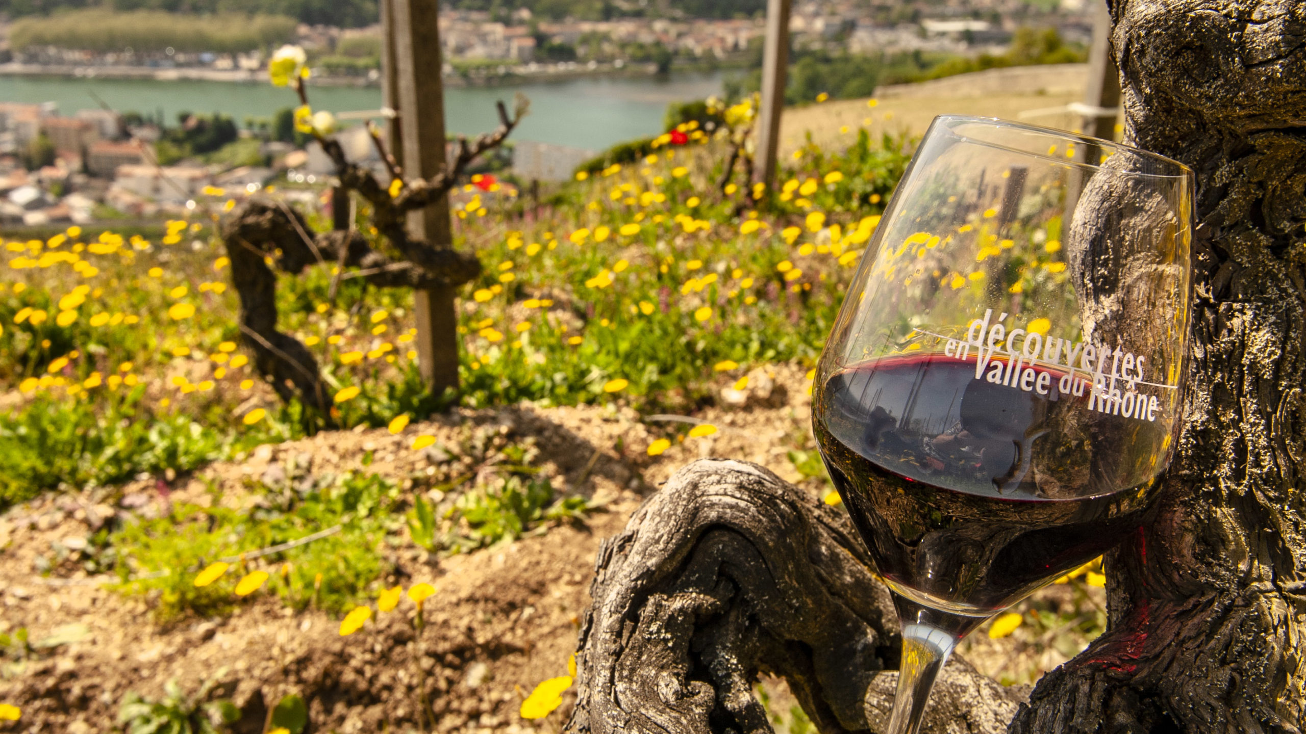 Messe der Weinregion: die Découvertes de la Vallée du Rhône. Foto: Hilke Maunder