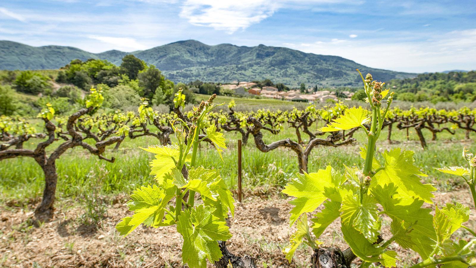 Côtes du Rhône: im Weinbaugebiet von Vinsobres. Foto: Hilke Maunder