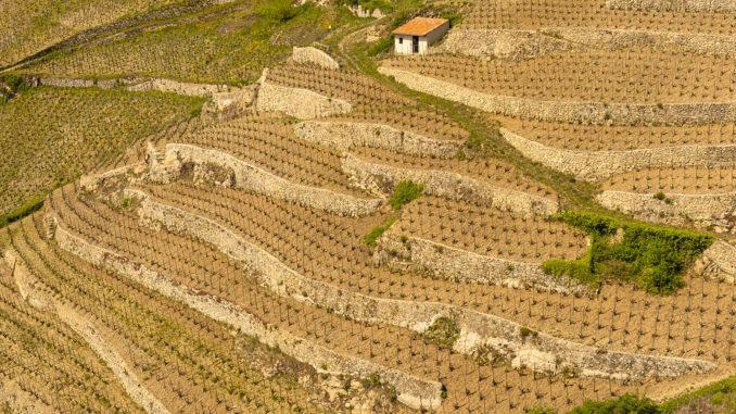 Die steilen Hänge im Norden der Côtes du Rhône macht oft den beschwerlichen Anbau in Terrassen notwendig, Foto: Hilke Maunder