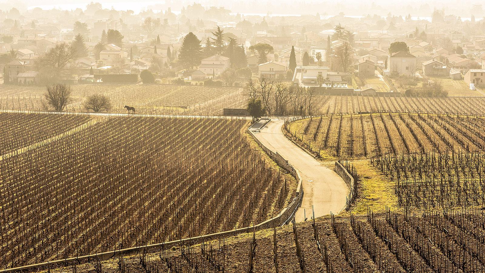 Die Weingärten von Tain-l'Hermitage im Winter. Foto: Hilke Maunder